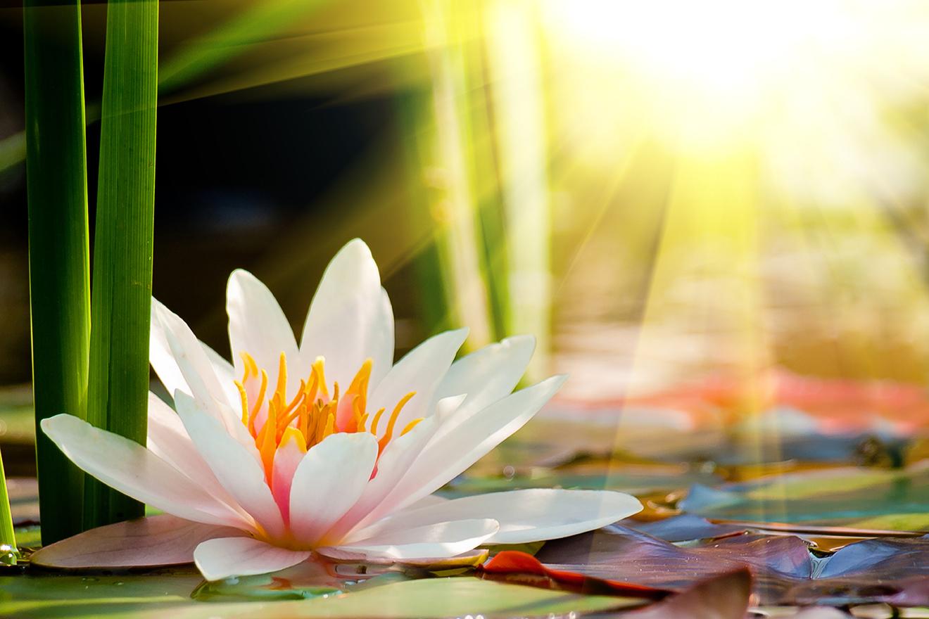 lotos indický prípravok Levamin